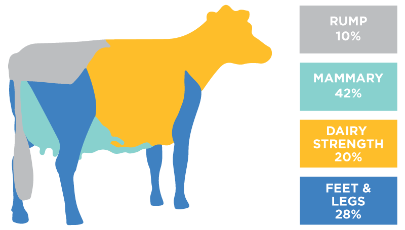Holstein breed formula