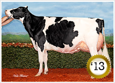 2013 325 Head  Grand Champion Female