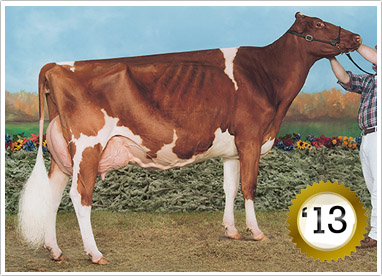 2013 - 80 Head - Grand Champion Female