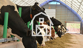 Holstein Canada: News-Events - National Holstein Convention